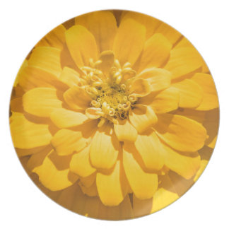 Zinnia Party Plate