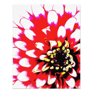 Zinnia Pop Photo Print