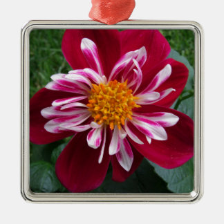 Zinnia Silver-Colored Square Ornament