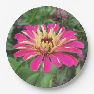 ZINNIA - Vibrant Pink and Cream - 9 Inch Paper Plate