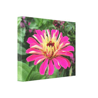 ZINNIA - Vibrant Pink and Cream - Canvas Print