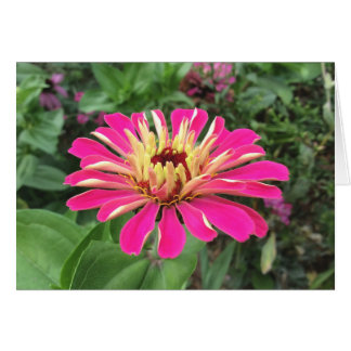 ZINNIA - Vibrant Pink and Cream - Card