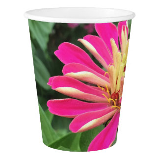 ZINNIA - Vibrant Pink and Cream - Paper Cup