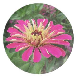 ZINNIA - Vibrant Pink and Cream - Plates
