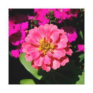 Zinnia, Wrapped Canvas Print.