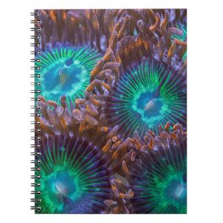 Zoanthid pattern notebook