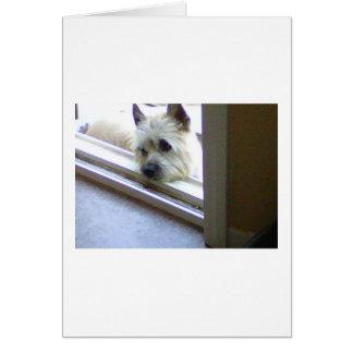 Zoe Cairn Terrier Card