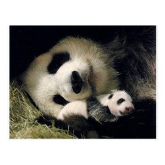 zoo-atlanta_giant_panda_lun-lun_and_cub cartes postales