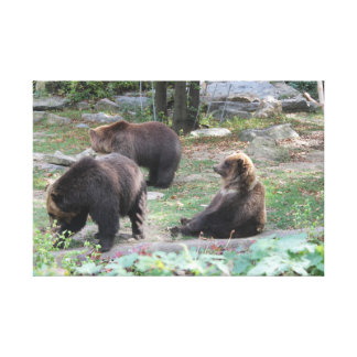 Zoo Bears Sitting Animals Canvas Poster