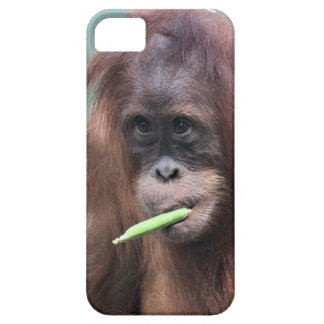zoo case for the iPhone 5