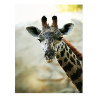 Zoo Giraffe Postcard