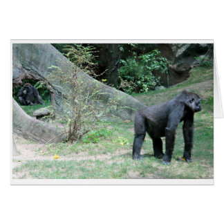 Zoo Gorilla Animal Card