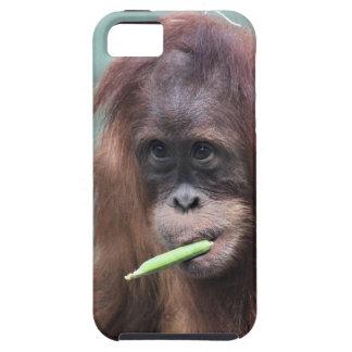zoo iPhone 5 case