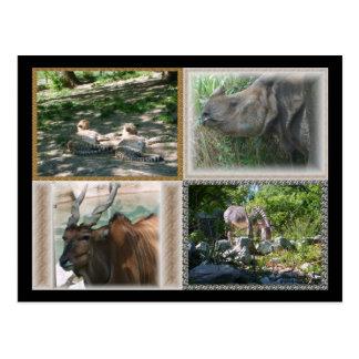 Zoo Life Postcard