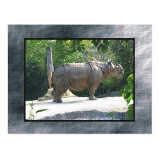 zoo rino postcard