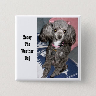 Zooey with bows, Zooey The Weather Dog 2 Inch Square Button