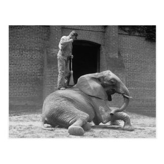 Zookeeper Sweeping an Elephant, 1922 Postcard