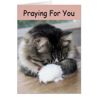 Zorro Kitty Praying For You Card