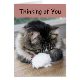 Zorro Kitty Thinking of You Card