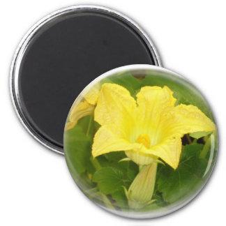 Zucchini Blossom in Swirl Fridge Magnets