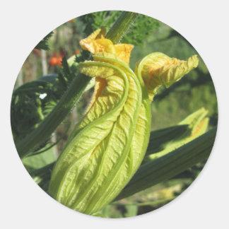 Zucchini plant in blossom in the vegetable garden classic round sticker