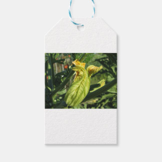 Zucchini plant in blossom in the vegetable garden gift tags
