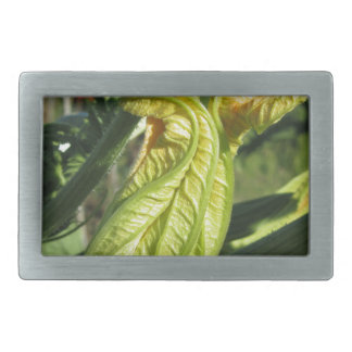 Zucchini plant in blossom in the vegetable garden rectangular belt buckle