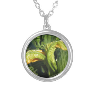 Zucchini plant in blossom in the vegetable garden silver plated necklace