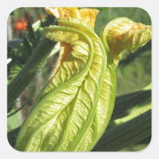 Zucchini plant in blossom in the vegetable garden square sticker