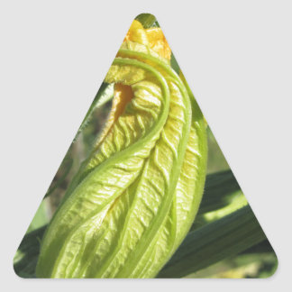 Zucchini plant in blossom in the vegetable garden triangle sticker